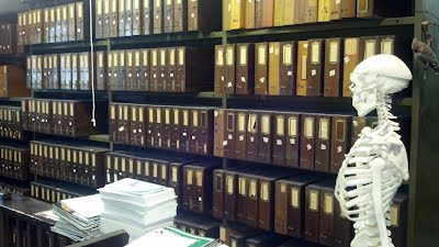 Specimen collection room where the cicadas are housed at the Staten Island Museum. Photograph by Alexander Bolesta.