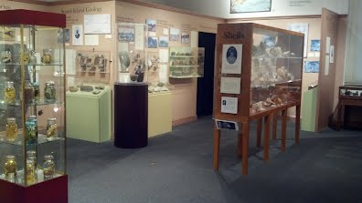 Permanent natural history exhibit at the Staten Island Museum. Photograph by Alexander Bolesta.